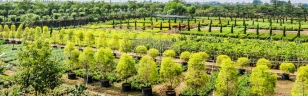 Privately owned Tysan Nursery